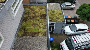 Sedumdak met zonnepanelen in Dordrecht